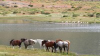Forest Service plans to remove famous Salt River horses in Arizona