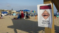 Shark attacks swimmer at California beach, woman will survive