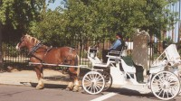 Boy shot by horse-drawn carriage driver in northern Arizona