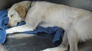 Queen Creek man facing animal cruelty charges